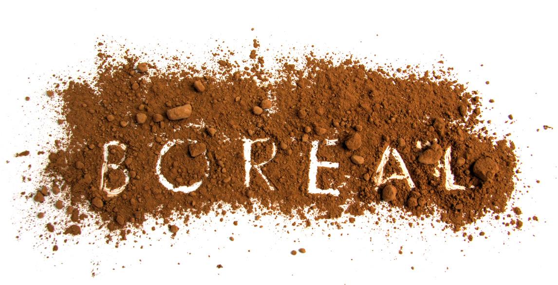 Chocolate Boreal